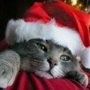 Run DMC  - Christmas in Hollis  (Digital Visions Re-Edit)